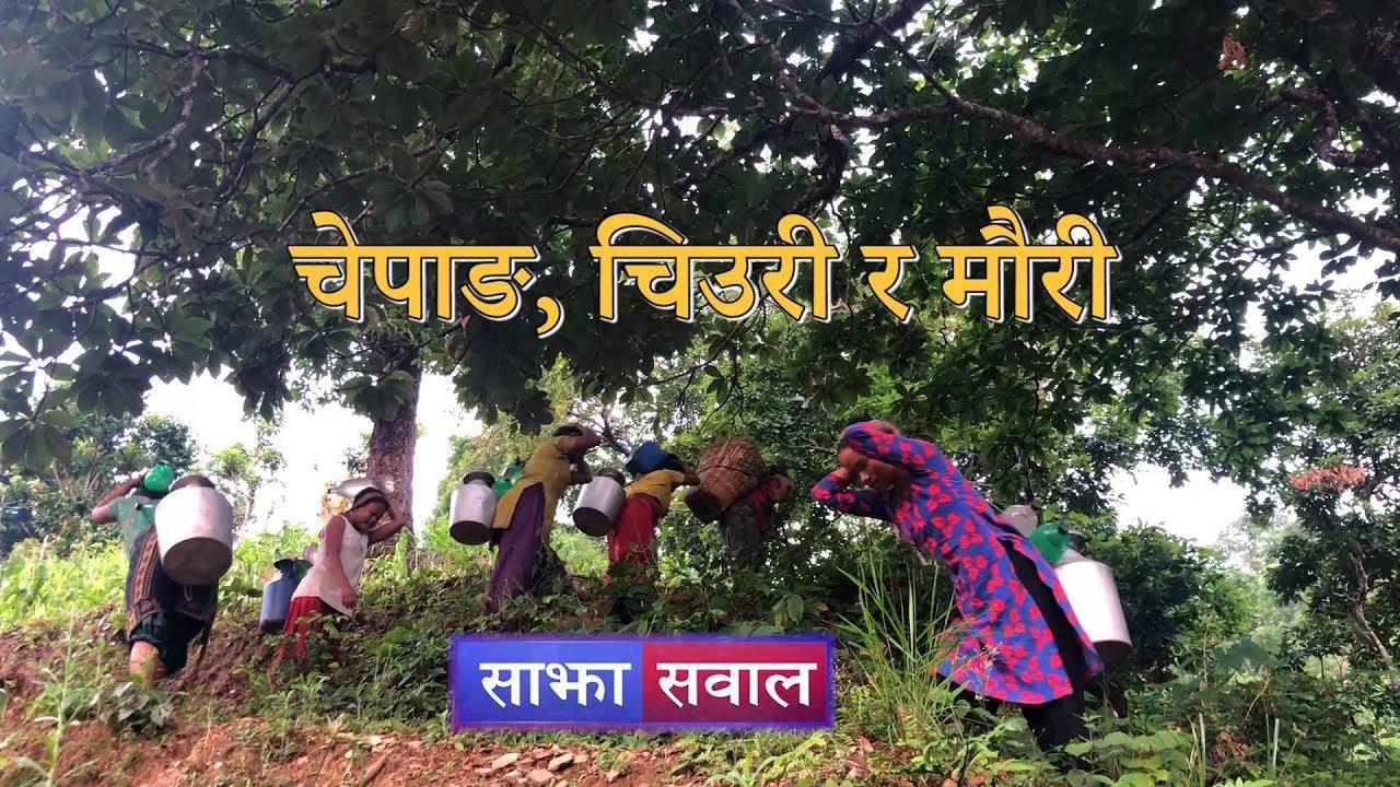 Sajha Sawal-545 | साझा सवाल । चेपाङ, चिउरी र मौरी…